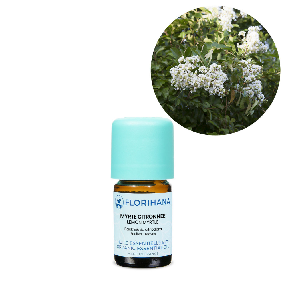 Lemon Myrtle (Backhousia) Organic