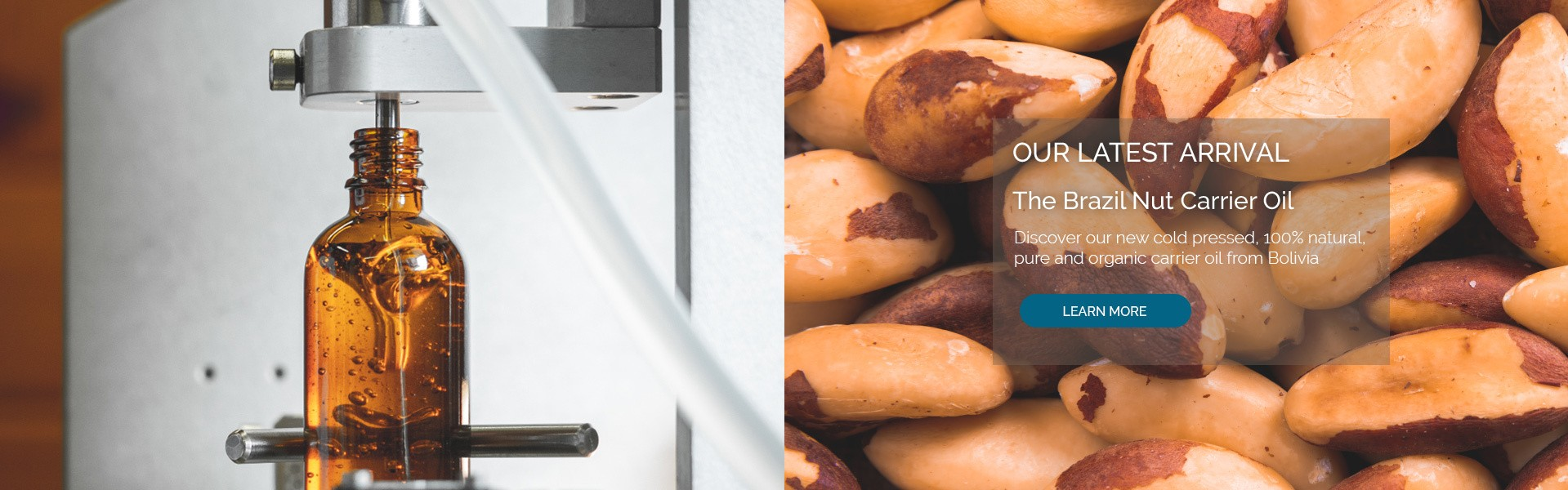Brazil Nut Carrier Oil. Discover our cold pressed, organic, 100% pure and natural oil from Bolivia.